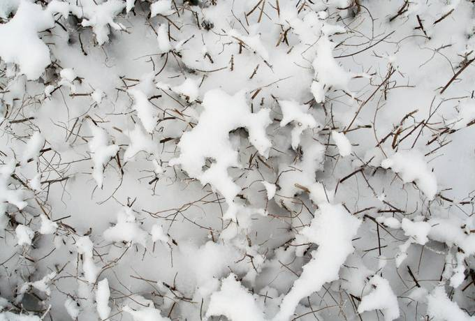 snow winter bush