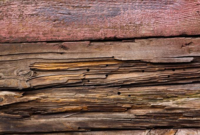 plank rotten wood woodworm