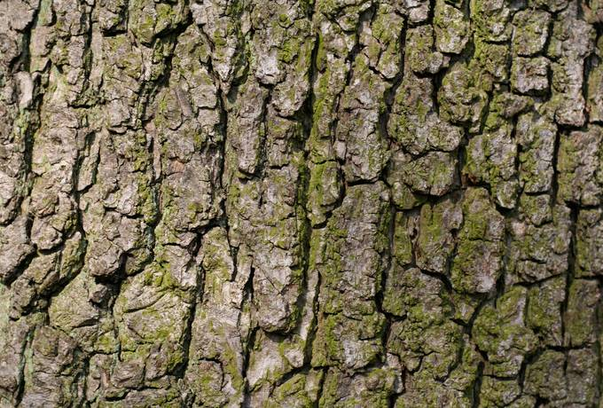 free wood bark nature texture