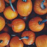 Autumn Pumpkins with Steams