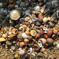 Colorful Pebbles and Shells on the Beach