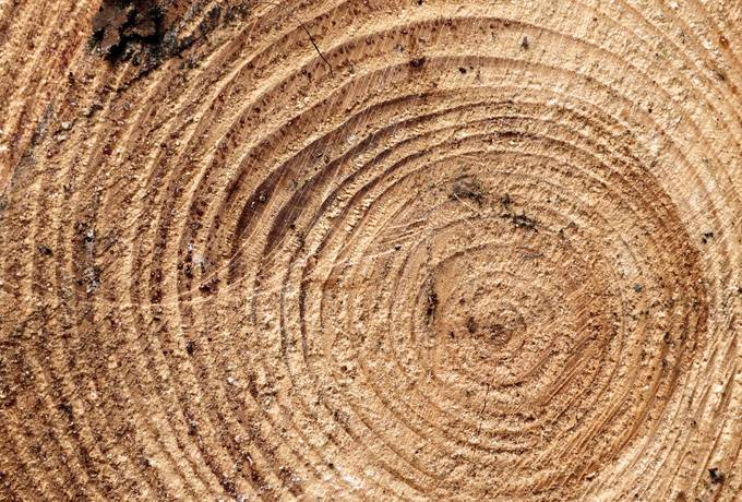 free Piece of Wood Cross Section texture