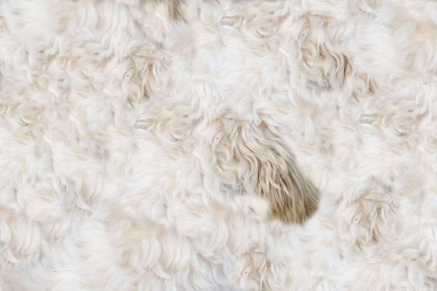 Beige Shaggy Fur free texture
