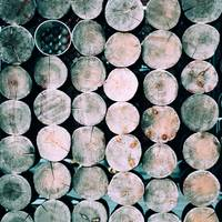 Dirty Round Wooden Stumps