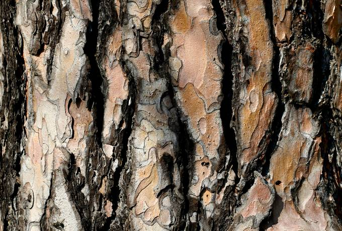 nature bark wood