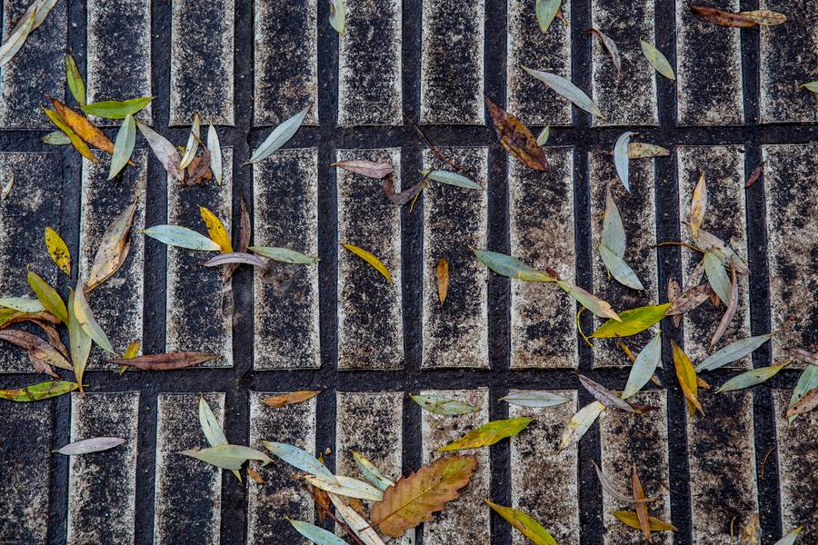 Wet and Dirty Autumn Pavement with Willow Leaves free texture