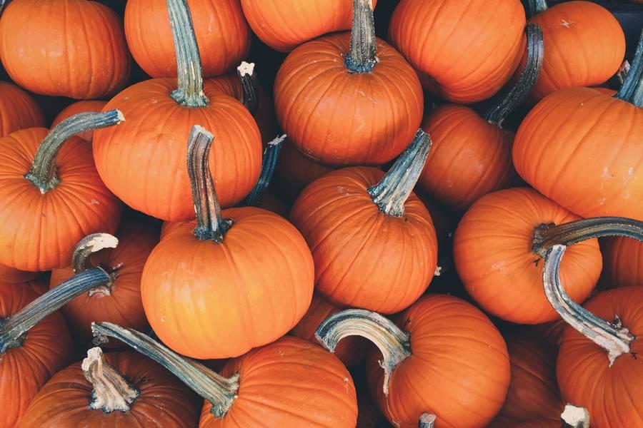 A Lot of Mini Pumpkins free texture