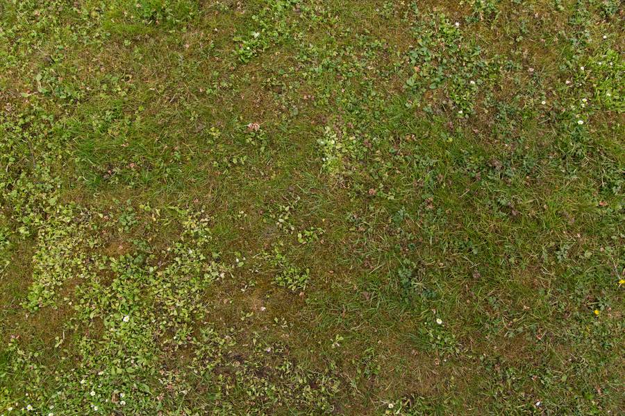 grass ground green free texture