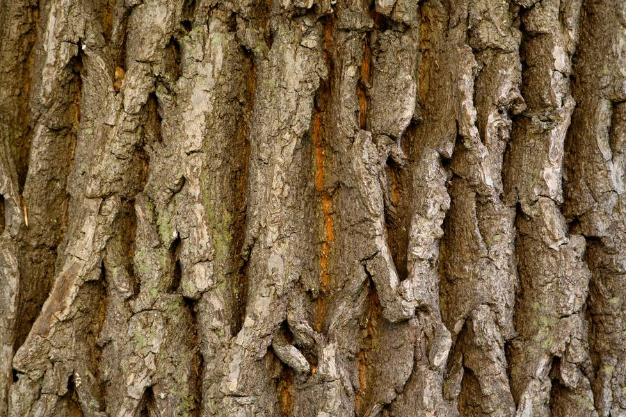 bark nature wood free texture