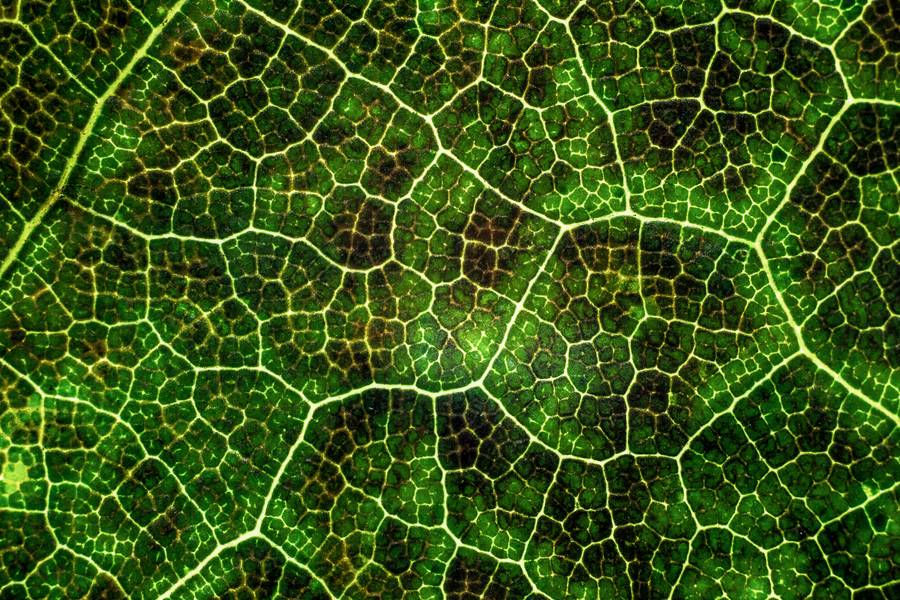 Macro Photography of the Leaf free texture