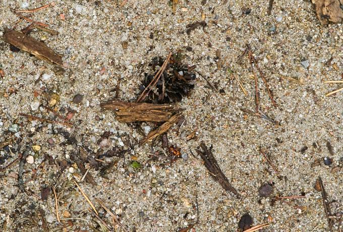 gravel sand ground