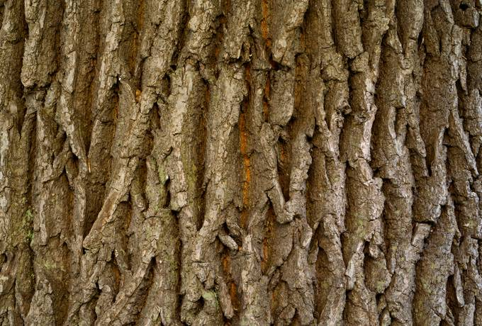 forest nature bark