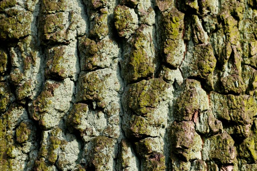 bark nature tree free texture