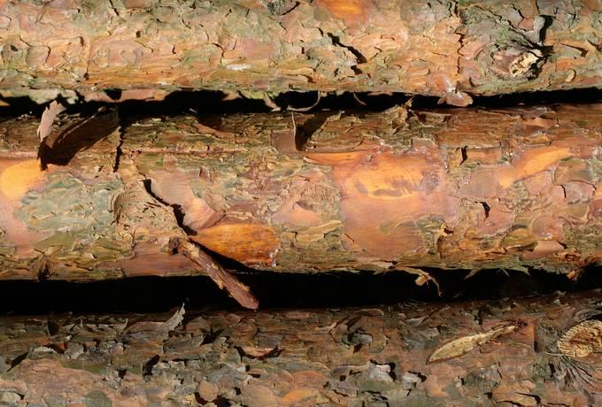 peeling bark tree