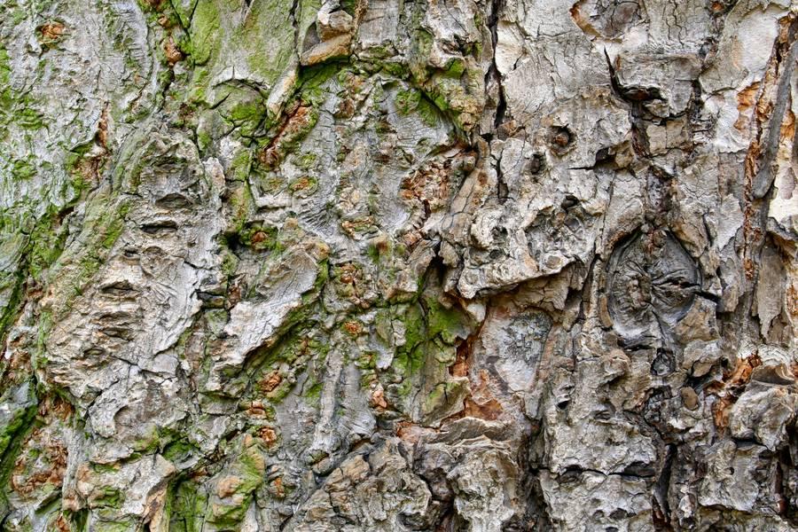 tree bark nature free texture