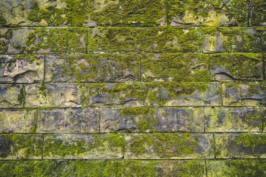 Green Moss on Old Brick Wall free texture
