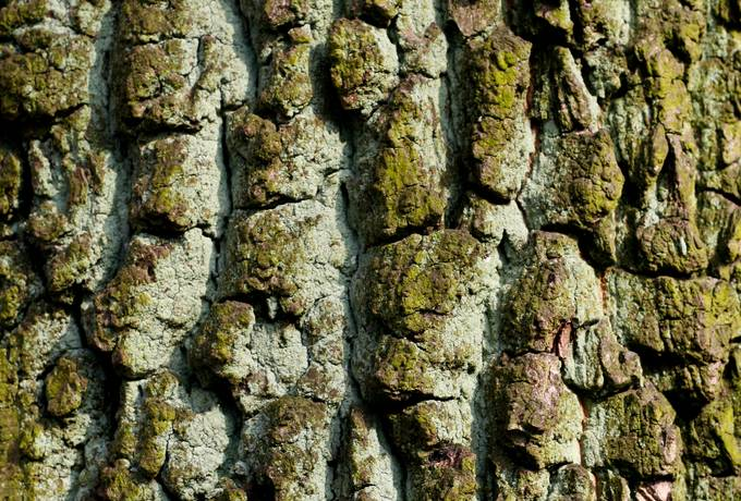 free bark nature tree texture